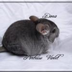 Dona, Porteuse Violet