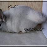 Carla, White Velvet
