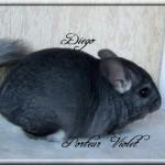 Diego, Porteur Violet