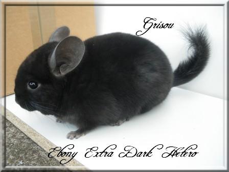Grisou, Extra Dark Hétérozygote