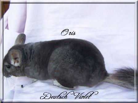 Oris, Deutsch Violet (RARE)