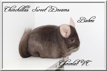 Babou, Chocolat Hétérozygote porteuse Violet