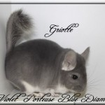 Griotte, Violet porteuse Blue Diamond