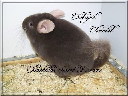 Chokapik, Chocolat Hétérozygote