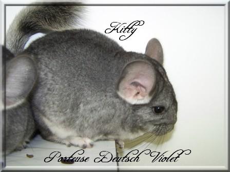 Kitty, Porteuse Deutsch Violet