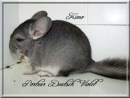 Kimo, Porteur Deutsch Violet