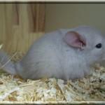 Les variante de beige/tan-violet sont toujours presque blancs