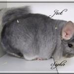 Jack, Saphir