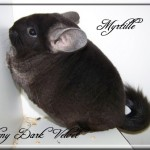 Myrtille, Ebony Dark velvet