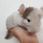 male white tan 1