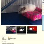 Bébé vendu à 2 mois + prix trop bas + plastique et tissus dans la cage