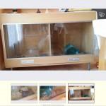 Cage en verre, problème d'humidité, aération, risque de teigne et maladies respiratoires.