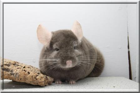 Basile vit dans un élevage en Allemagne