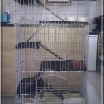 Cage d'Igloo (pour lui tout seul)