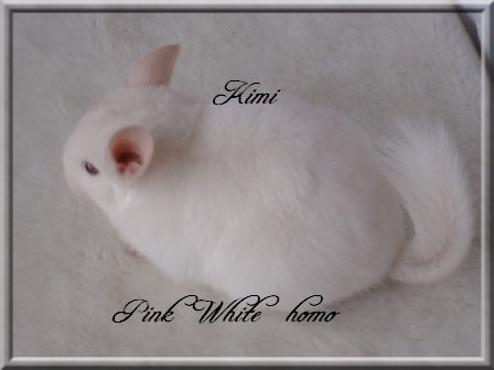 Kimi, Pink White Homozygote