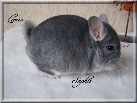 Léonie, Saphir