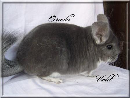 Orenda, Violet