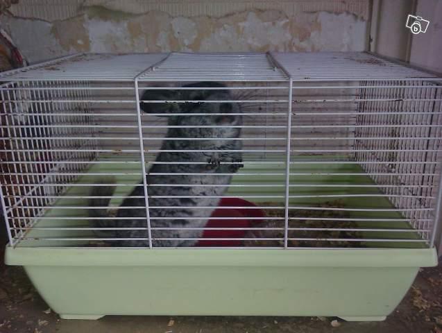 Chinchillas détenus dans une cage à hamster, aucune planche, crasse ! Paille utilisée comme litière !