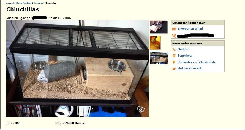 Chinchilla détenu dans un terrarium, aucune planche, pas de possibilité de sauter, risque de développement de moisissure (humidité) et chaleur trop importante à l'intérieur.