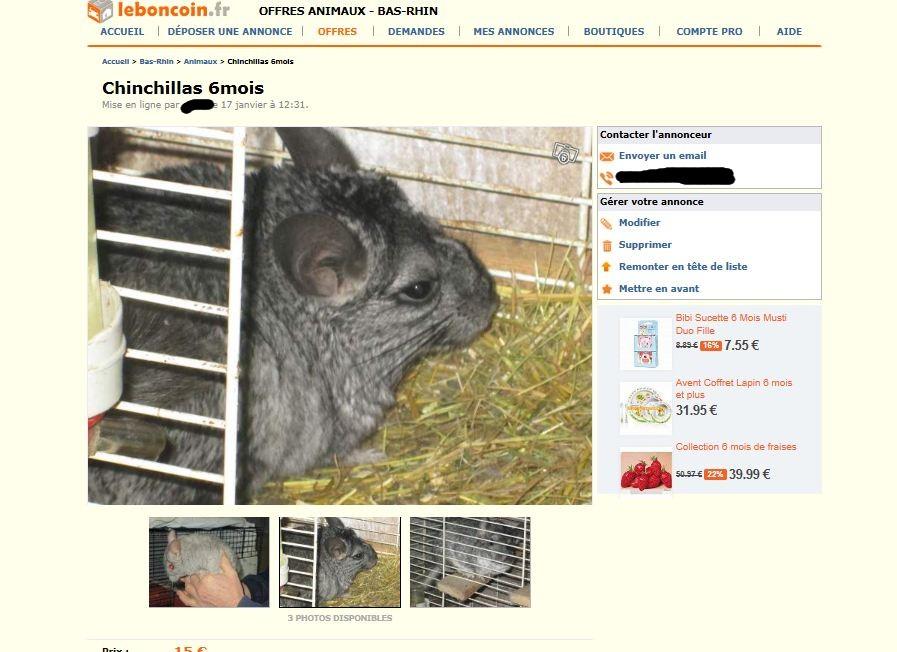 Encore des animaux sur une litière de foin, fourrure non entretenue, pas de terre à bain. Vendus comme animaux de reproduction !!!! Prix 15€ pièce