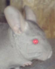 ratonprofil